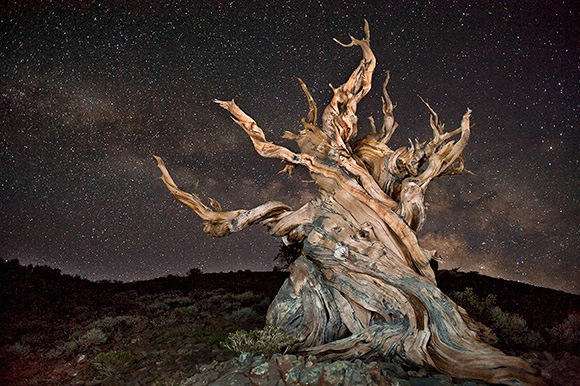 Bristlecone Stars (c) 2011 by Fred Mertz