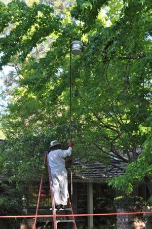 honey bee invasion in Menlo Park