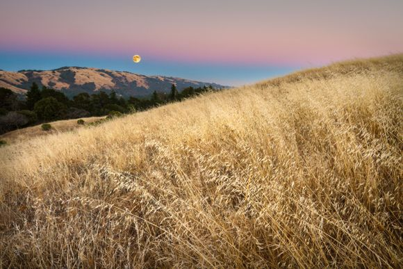 Russian Ridge Open Space by Phillip Nicholas
