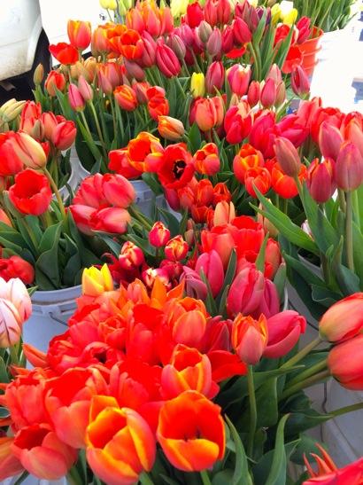 tulips at farmers market_vert
