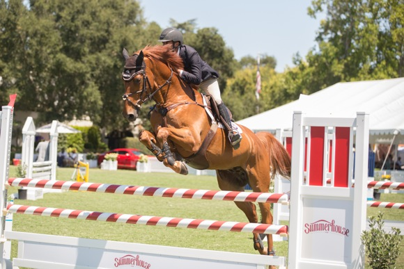 chestnut horse jumping