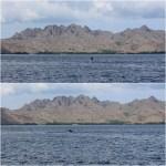 wild dolphins kanawa