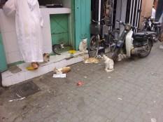 duże ilości kotów na raz
