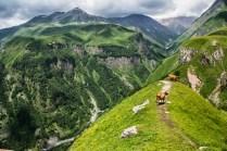 Krowy wysokościowe