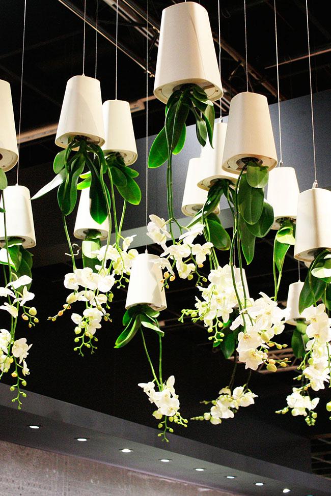 hanging plants geberit