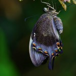 Blue butterfly emerging from cocoon, a metaphor for family constellation for physical illness.