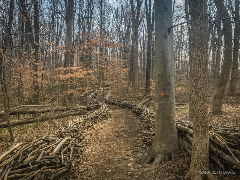 Seneca Connector Trails in Seneca Tract