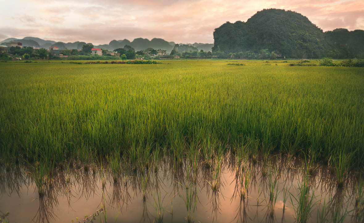 Rice Fields - Travel Quotes