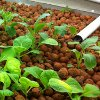 Aquaponics vs. Traditional Agriculture
