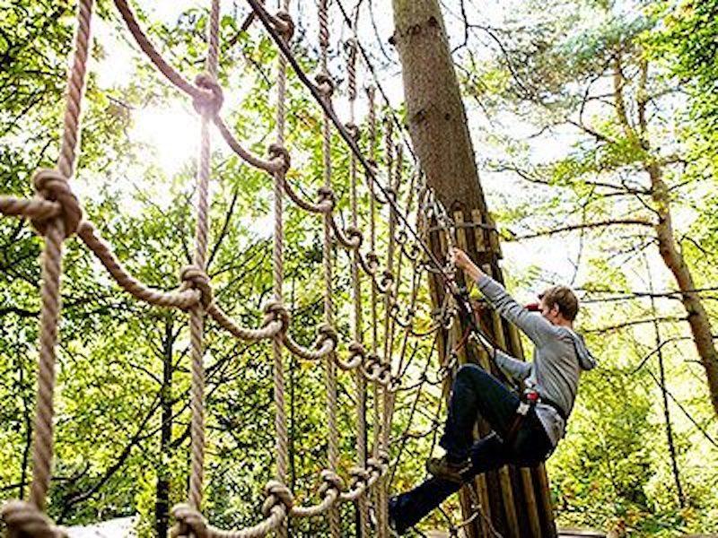 Go Ape Tree Top Adventure in Newcastle