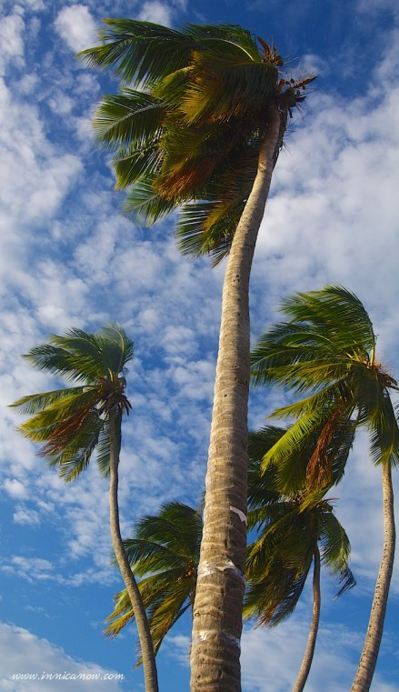 Photo Journalism Friday: Advice from a Palm Tree