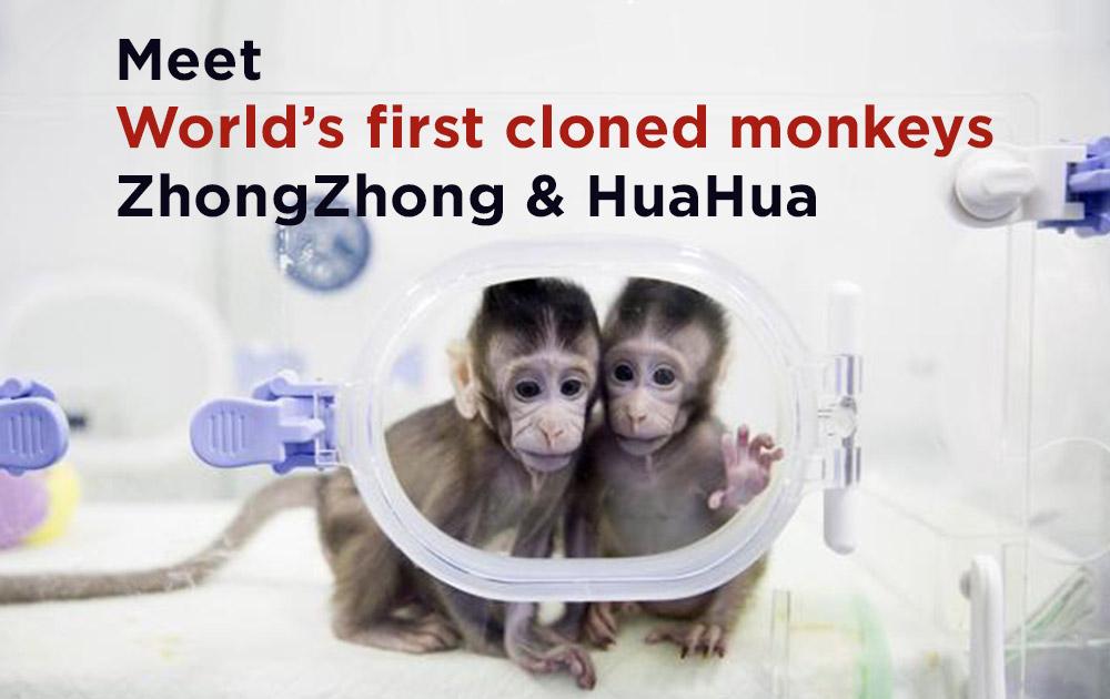 Cloned-monkeys-zhongzhong-&-huahua