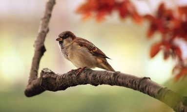 Quick Bytes: Sparrow Songs, Invisibility Cloaks, and Alien Wasps