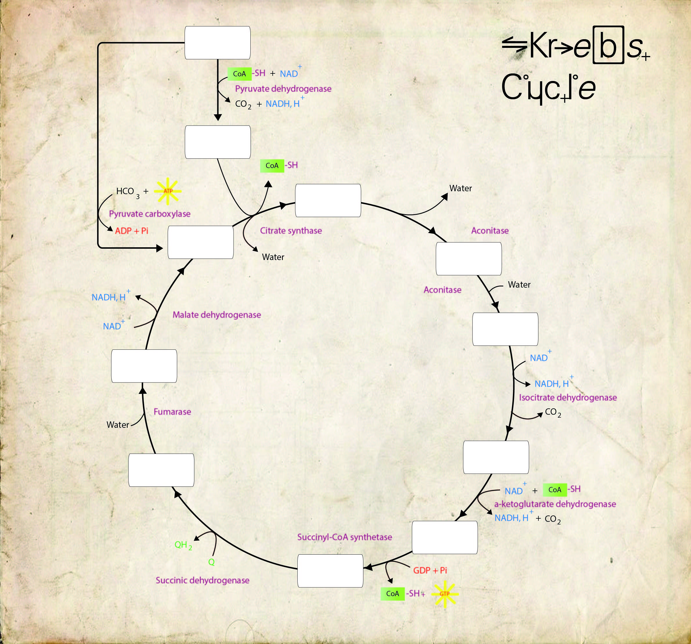 explain krebs cycle with diagram 4 pin connector wiring year 3 innovation graphic design illustration page 2