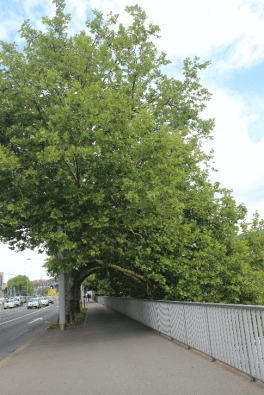 Awesome tree on the street