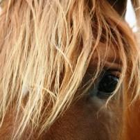 pexels-photo-58897.jpg horse