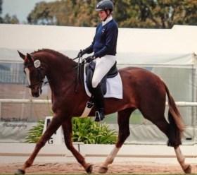 Horse Pic 4