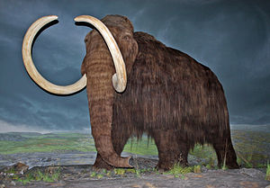 Scientists Close to Reviving Wooly Mammoths From Extinction