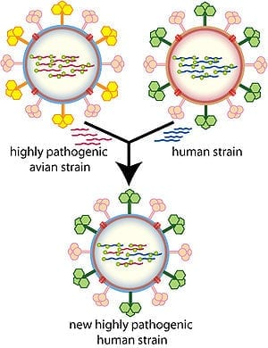 Overview of how different influenza strains ca...