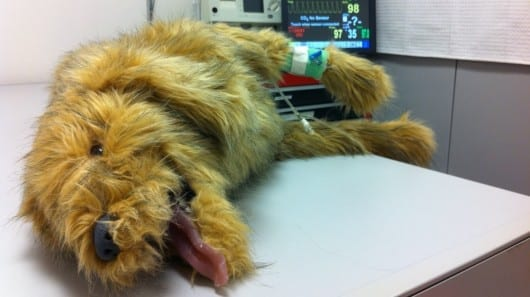 Robo-pets give veterinary students hands-on experience in new simulation center