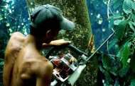 Smartphones Hung From Trees Alert Rangers to Illegal Logging