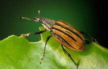 Scientists shut down reproductive ability, desire in pest insects