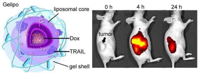 Zhen-Gu-Cancer-image