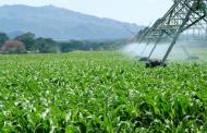 Water 'Thermostat' Could Help Engineer Drought-Resistant Crops