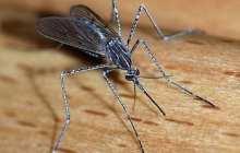 A Vaccine Alternative Protects Mice Against Malaria
