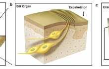 A new kind of vibration sensor could give us 'Spidey sense'