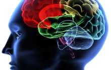 Brain imaging may help predict future behavior