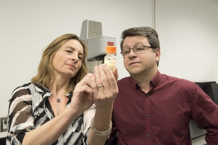 Sophie Lerouge and Réjean Lapointe examine the cancer fighting biogel they have developped. Credit: CRCHUM