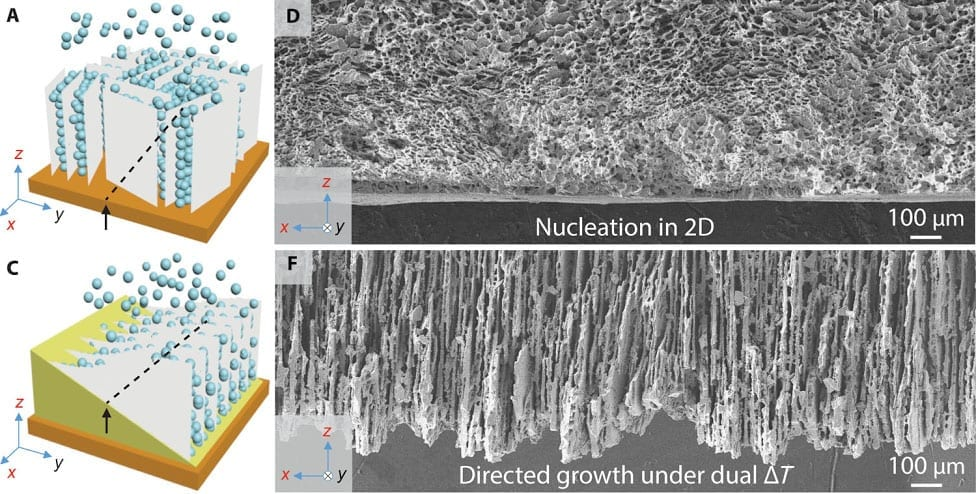 SEM images of xz cross-sections perpendicular to the cold finger show that in conventional freeze-casting (A&D), nucleation produces a disordered layer of ceramic particles. Under bidirectional freeze-casting (C&F), with dual temperature gradients, ice crystals grow both vertically and horizontally into a well-aligned lamellar structure.
