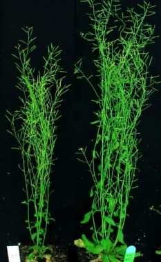 Chance Finding Could Transform Food and Biofuel Production