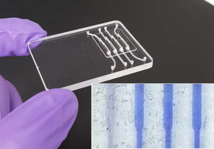 Indicators in a test capable of detecting low levels of the Zika virus turn blue (inset) when the virus is present in a saliva sample. Credit: American Chemical Society
