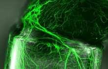 Nanometric imprinting on fiber could help nerve regeneration, artificial tissue creation and smart bandages