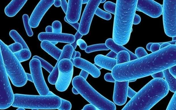 New bacteria defence mechanism discovery could be significant