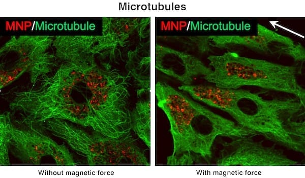 Using magnets and nanoparticles to deliver drugs to target tissues