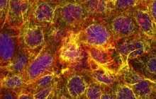 Guts-on-chips respond in the same way to aspirin as real human organs do opening up many possibilities