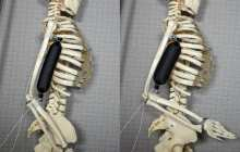 Artificial soft robotic muscle lifts 1000 times its own weight