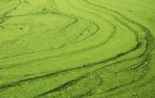 Feeding and fueling the planet with algae via new genome engineering technique