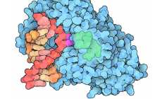 An enzyme that can repair DNA damage from UV rays?