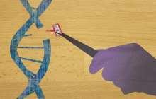Transforming the CRISPR gene editor into a highly precision tool