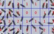 Predicting crowd behavior using physics theory