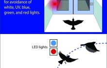 Could red and blue LED lights help to save millions of birds?