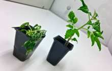 Soil microbes play a key role in plant disease resistance