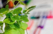 Not GMO: A new way to get CRISPR/Cas9 into plant cells without inserting foreign DNA
