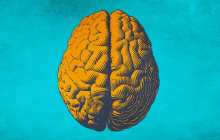 """Focused ultrasound opens the natural """"blood-brain barrier"""