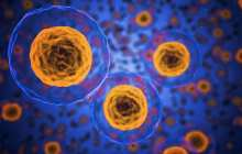 A new type of immune cell plays a crucial role in the immune response to respiratory infections
