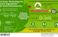 Converting cellulose to biofuel using a new efficient laser technique